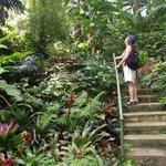 Hunte's garden
