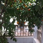 Orange tree outside our Zanzibar room
