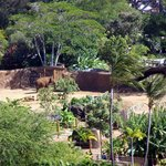 Elephant enclosure at the Honolulu Zoo.