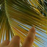 just relaxing by the pool side wishing to touch the beautiful palm trees