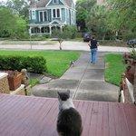 Blick zur Straße mit Hauskatze