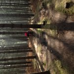 Singletrack in Thetford Foresy