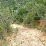 MTB Trail Rampe / Downhill