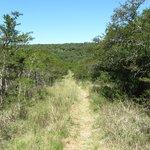 MTB Trail Tal