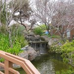 Walking bridge and Koi pond