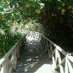 Ventanilla beach manglars. Oaxaca. Mexico.