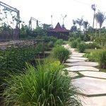 Eco garden! provides the best salads !! (organic)