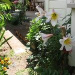 Kippilaw House Garden