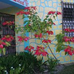Poinsettia near entrance