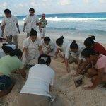 Concour de chateau de sable avec le personnel agreable journée