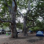 Sycamore Canyon Campground Foto