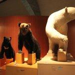 クマの剥製による、ベルグマンの法則の開設展示
