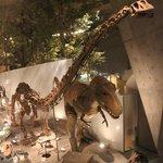 充実した恐竜関係の展示