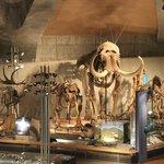 ゾウの仲間達の骨格標本群