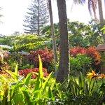 Hotel/Compound Front Garden