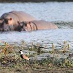 excursão Parque de Orango- hipopotamos