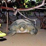 excursão ao Poilão- Tartarugas