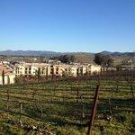 Vino Bello viewed from vineyard