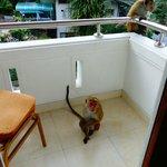 Balcon de notre chambre