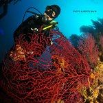 Gorgones Rouges, Easy Dive