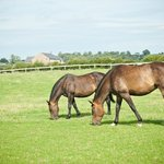 Horses in the front field