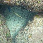 Samsara snorkeling