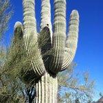 The Mighty Saguaro!!!