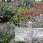 Ridge/garden