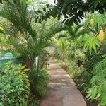 walkway in Eden