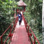 An easy, but thrilling walk on the sky path to the top of the forrest.