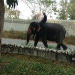 elephant walking pass