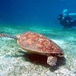 Turtle on Pandan Island