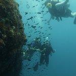 Diving Green Rock