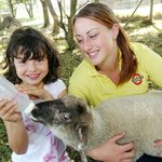 Lambs never seem to get full-up! We need lots of helping hands at feeding time!
