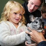 Have you ever held a chinchilla?