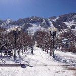 Beautiful Aspen