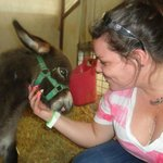 Newborn baby donkey in Sept 2012