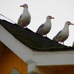 Birds waiting for the Herring