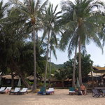beachfront and sunbeds of Palm Leaf
