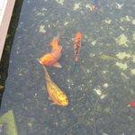 Бассейн с рыбками при выходе из номера