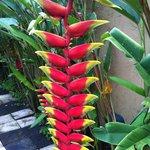 Flowers in Ubud Green