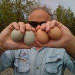 Fresh eggs from our farm