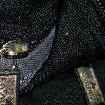 bed bug on bag