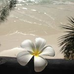 Beach and baobab flower