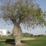 Interesting tree in Aspire Park