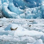 Seals and Sawyer Glacier