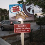 Warning sign for Gopher Tortoises - we didn't see any though