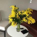 Février = mimosa (Mandelieu)