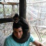 perching monkey
