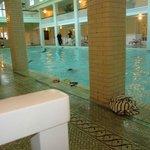 Spring fed pool
